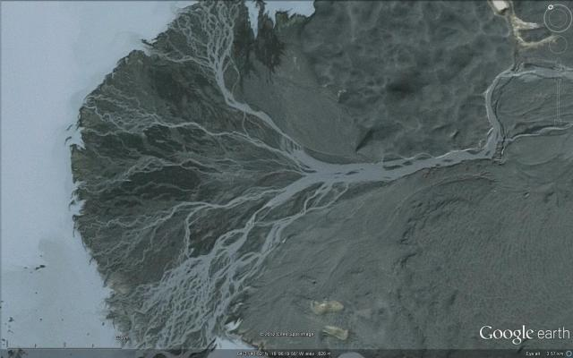 tree Iceland